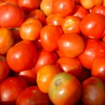 Ripe Juicy Tomatos From Johns Island