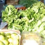 Lots of Fresh Greens