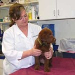 Practicing Family Pet Medicine: Advanced Animal Care