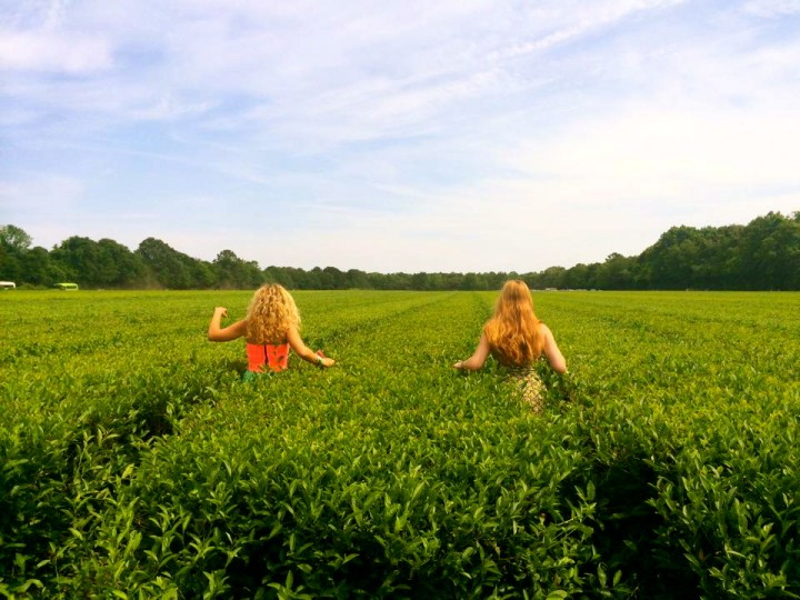 Girls in Tea Field
