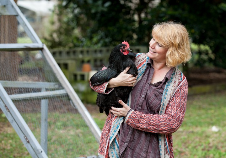MOUNT PLEASANT: Molly the chicken is well-known for making friends with other chickens
