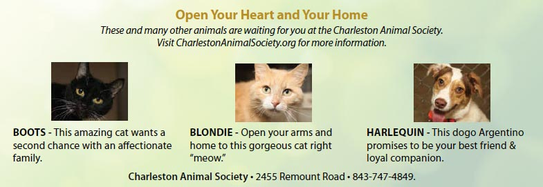 Charleston Animal Society ... open your heart and home for our little friends