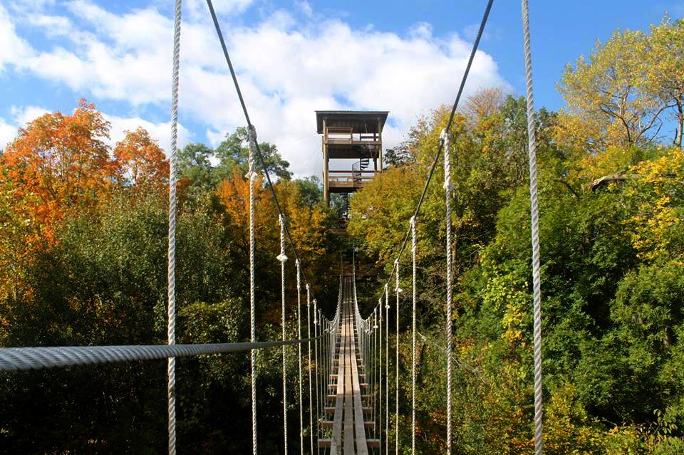Zip Line Bridge