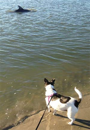 Noel Evans the Jack Russell Fox Terrier mix, Kathy Evans