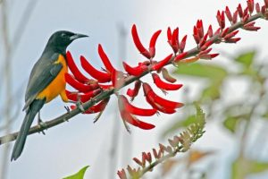 Native Planting for Birds Discussion @ Wild Birds Unlimited - Mt. Pleasant |  |  |