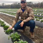 Strawberries from Boone Hall: A Local Labor of Love