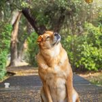 Capturing Life in Dog Years:  A Day in the Life of a Pet Photographer