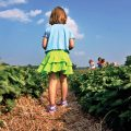 A young girl walking through rows of strawberries at Boone Hall Farms' U-Pick Fields