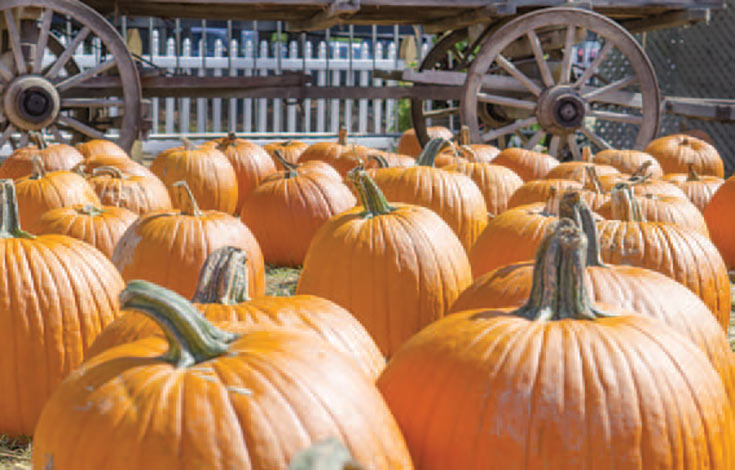 Celebrate Fall at the Boone Hall Pumpkin Patch