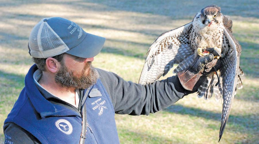 Stephen Schabel is the director of education and husbandry at The Center for Birds of Prey.