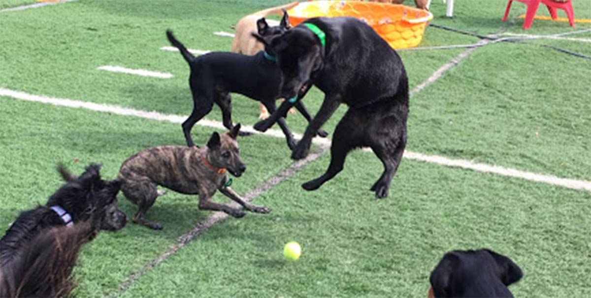 "Dogs getting some ""Playtime Paradise"" at Pooch Palace"