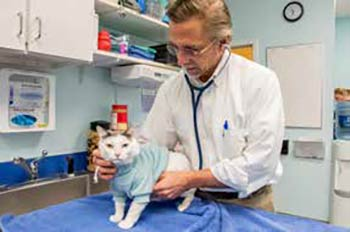 Dr. David Steele caring for one of his feline patients during an office visit.