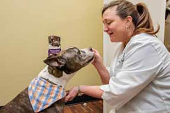 Dr. Leslie Steele cares for one of her canine patients.